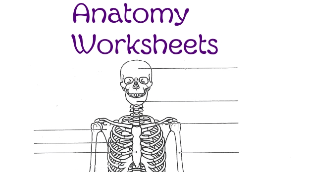 Anatomy Worksheets Skip The School
