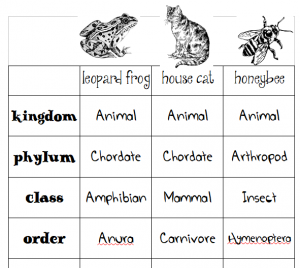 animal classification worksheets for secular homeschool